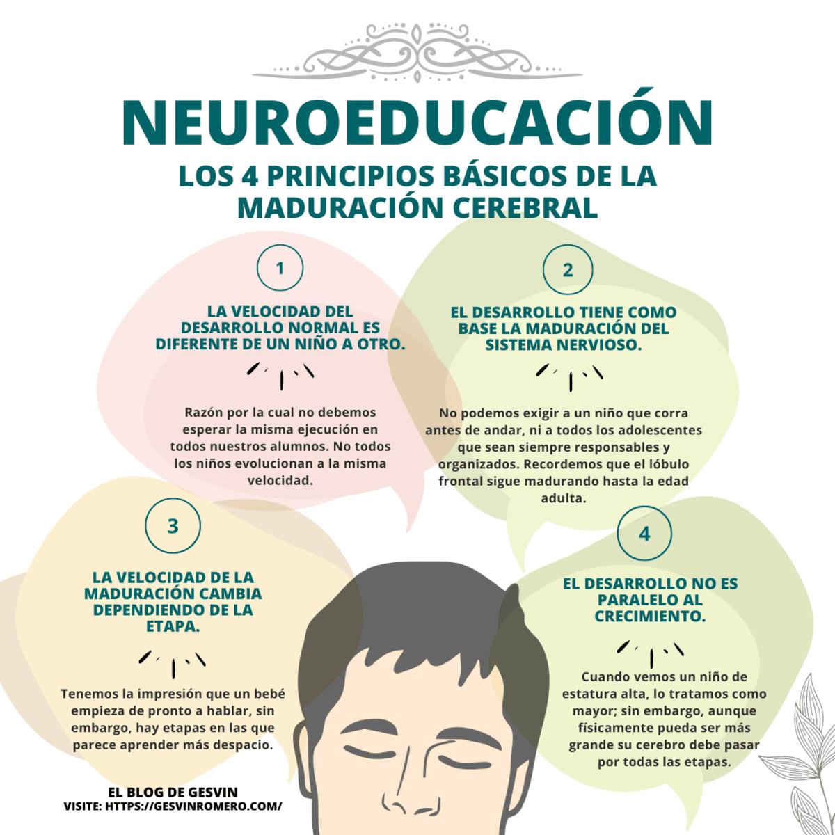 Neuroeducación - Los 4 Principios Básicos de la Maduración Cerebral y Desarrollo Cognitivo.